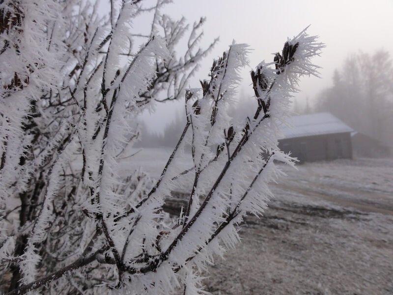 Sweden cold