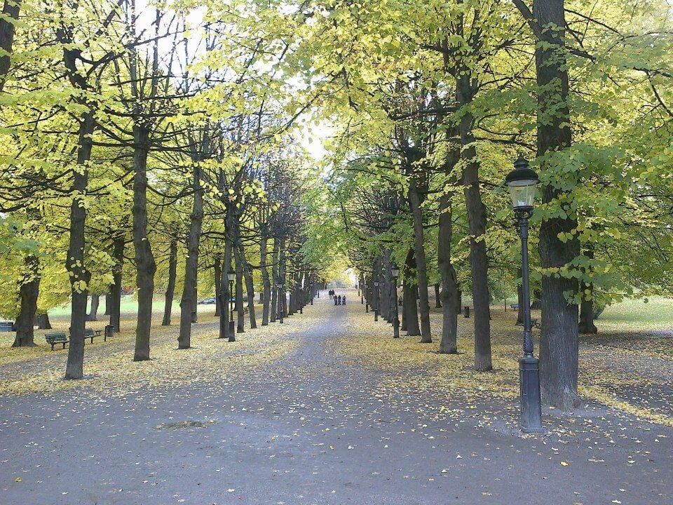 Swedish Trees
