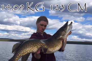 giant-fish-norrland