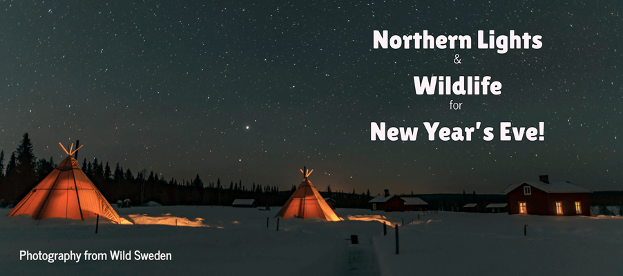 northern lights wildlife new years eve tour