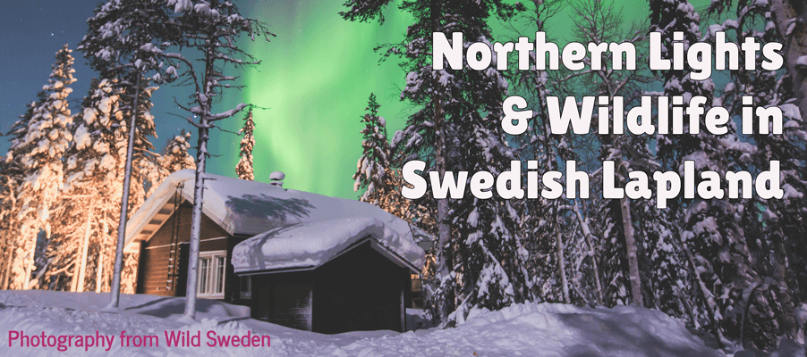 Northern Lights & Wildlife in Sweden Lapland